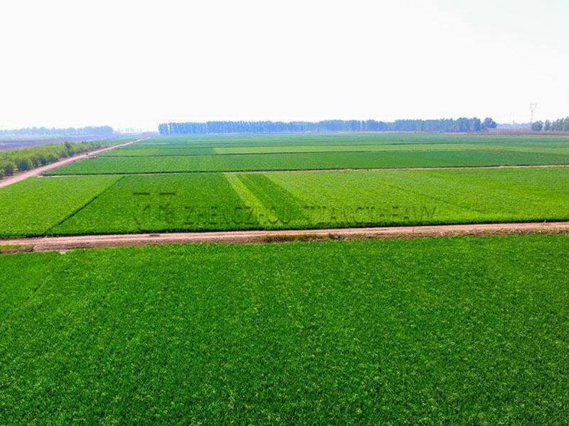 Organic Fertilizer Plant (3)