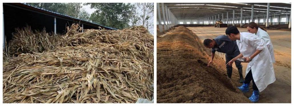 Straw organic fertilizer
