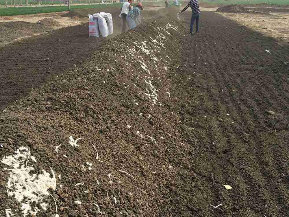 Chicken manure organic fertilizer (1)
